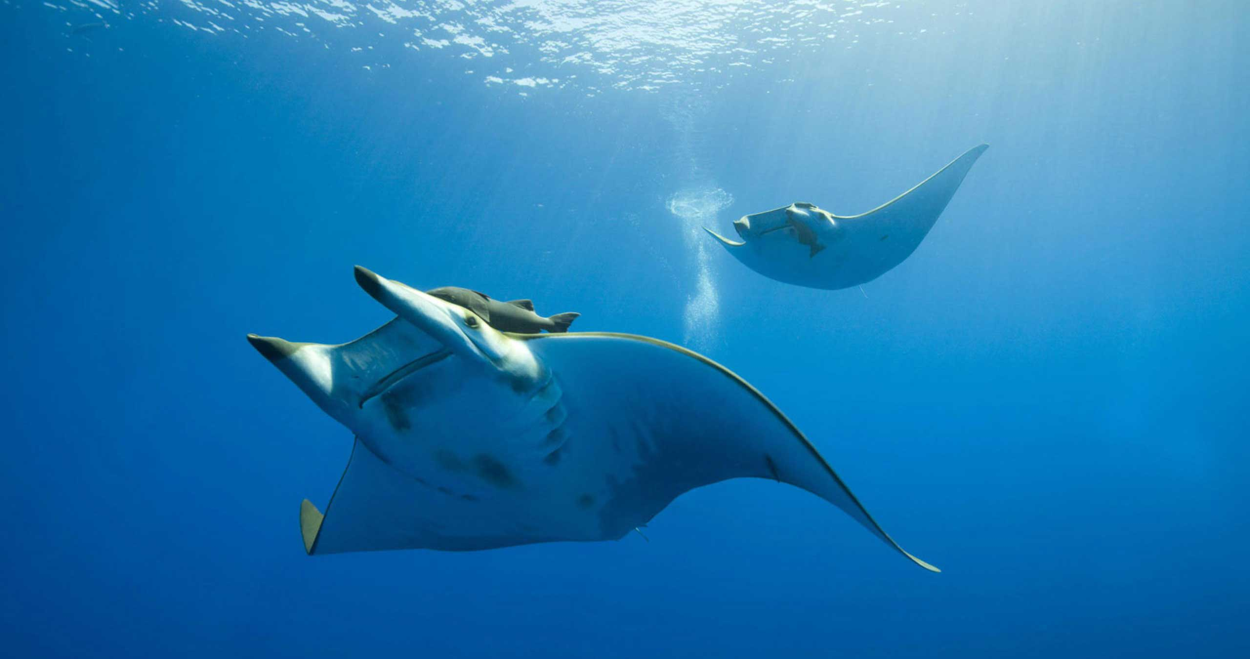 Dive trips to remote parts of the Indonesian Archipelago