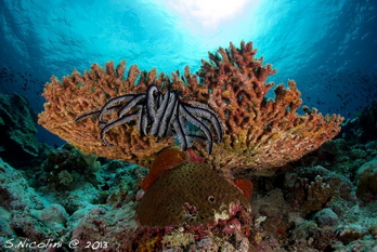 Diving_Wakatobi