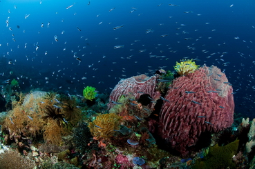 alor_divers_eco_resort