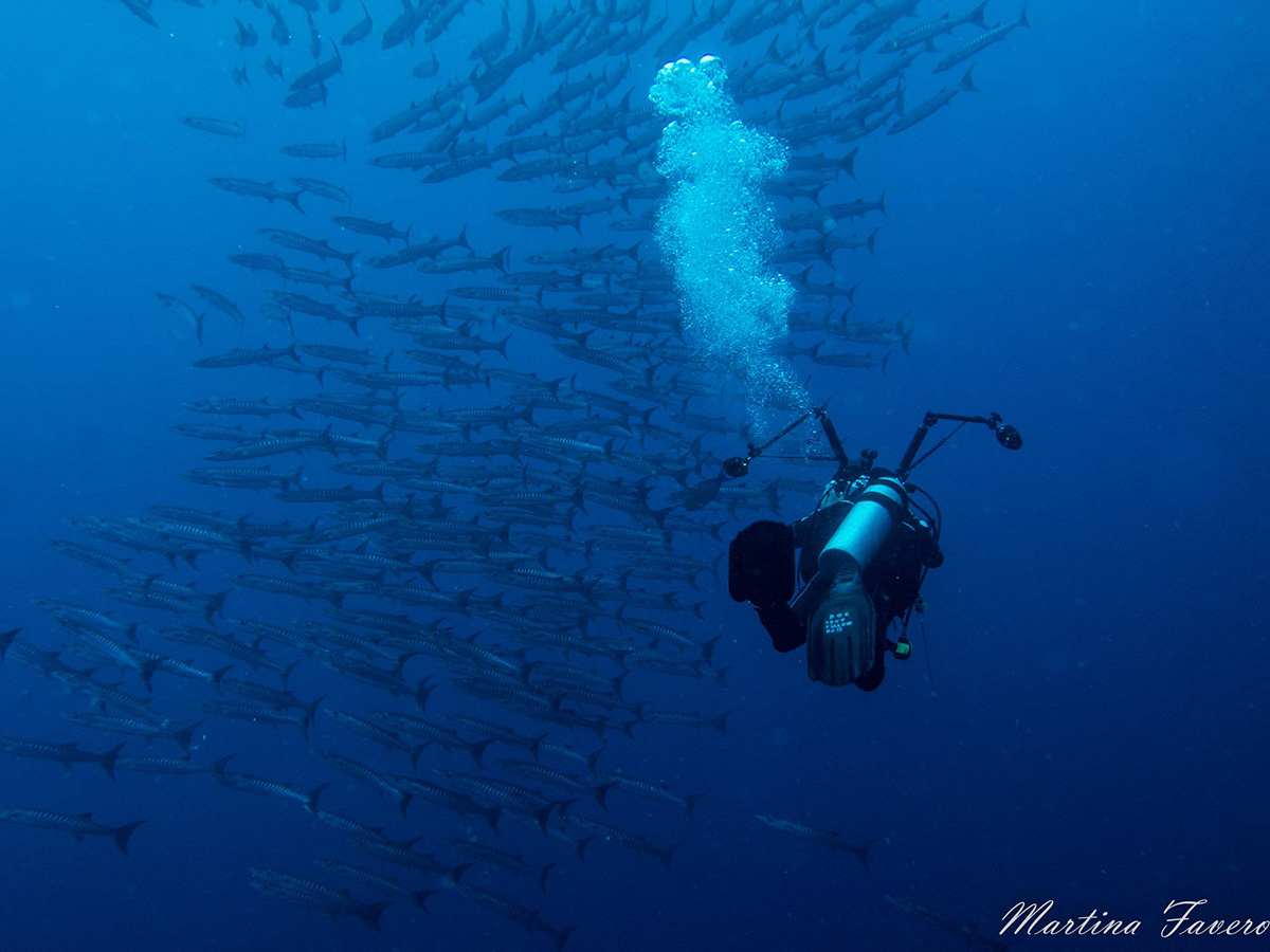 scuba_diving_on_maluku_explorer
