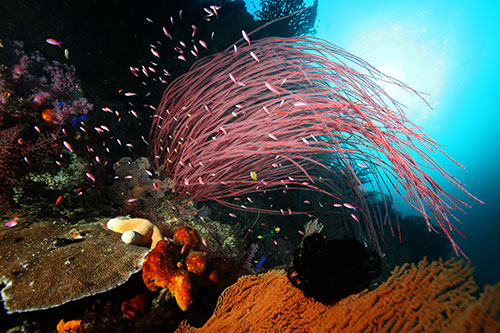 Forgotten Islands marine life coral reefs