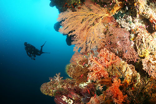 Forgotten Islands marine life coral reef