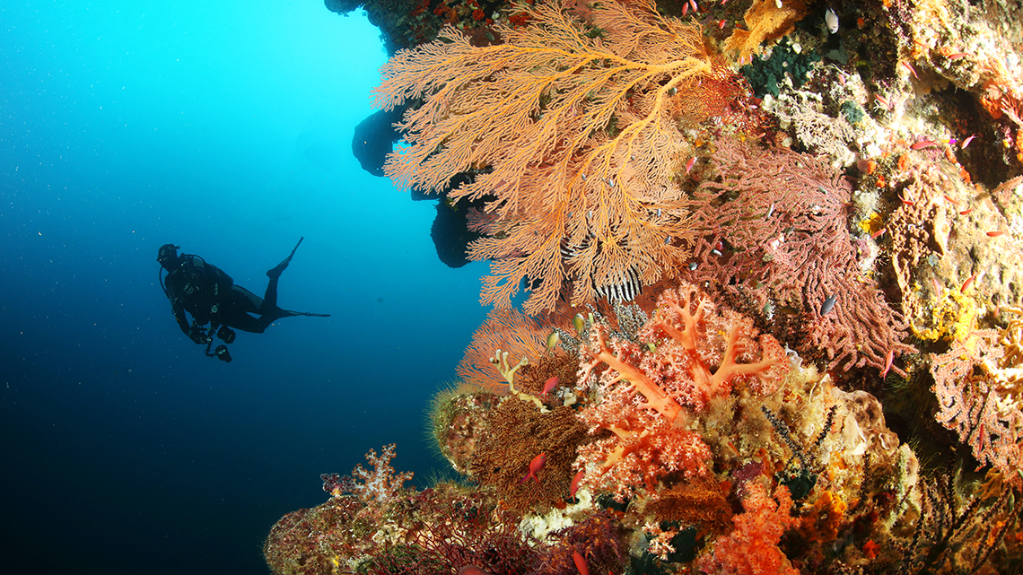 diving_forgotten_islands_anciente_coral_reefs