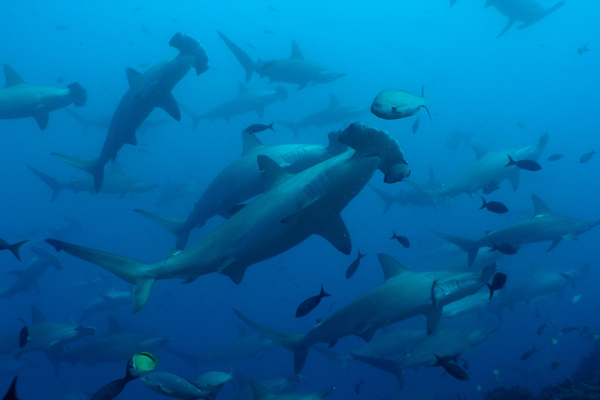 cruises for scuba divers in Galapagos