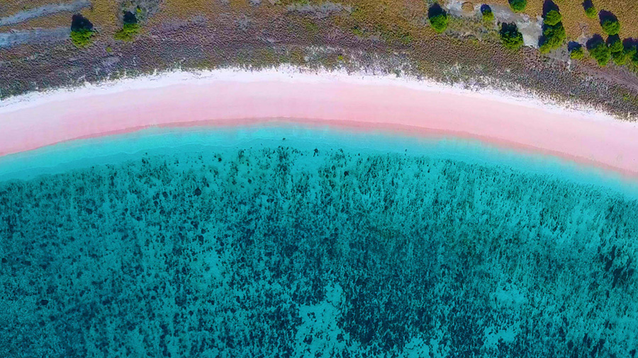 Sandy pink beach painted by coral