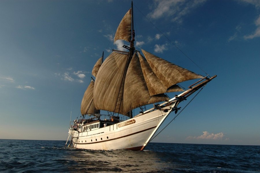 Cruising Indonesia as Ondina Liveaboard's agent, is committed to ensuring you a perfect diving holiday